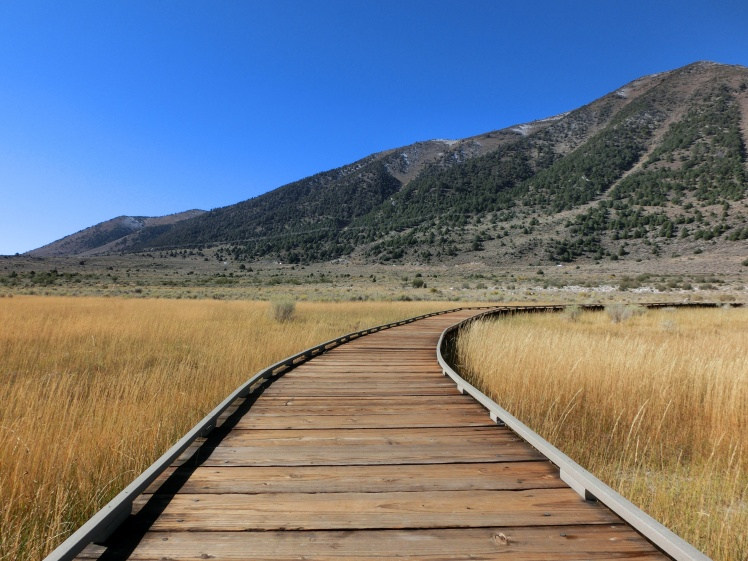Follow wooden boardwalk path through prairie - landscape photo